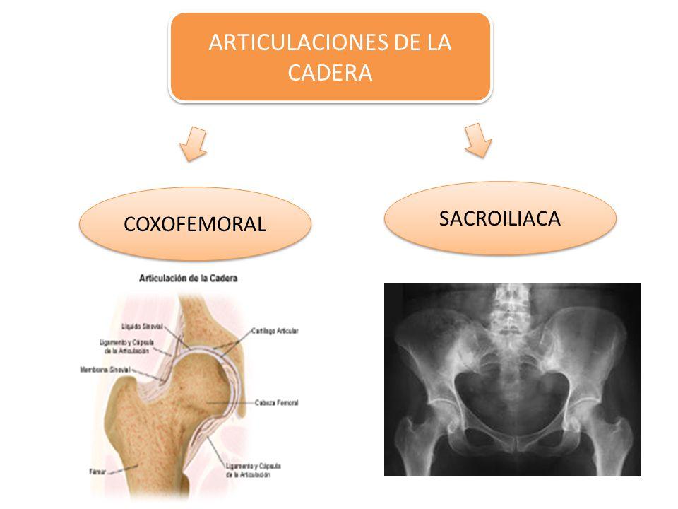 ARTICULACIONES DE LA CADERA COXOFEMORAL SACROILIACA