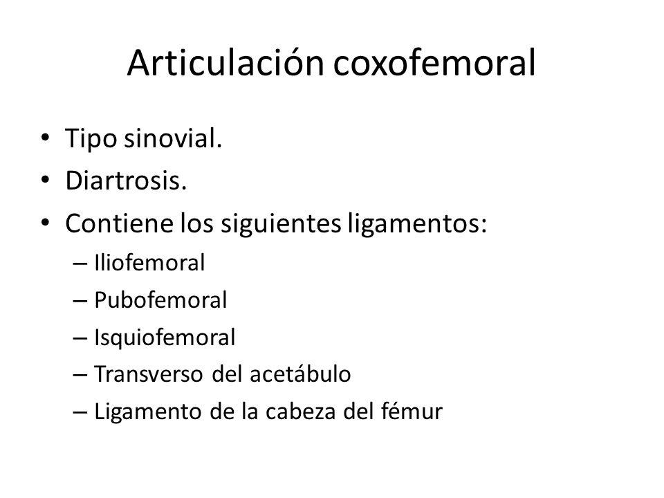 Articulación coxofemoral Tipo sinovial.Diartrosis.