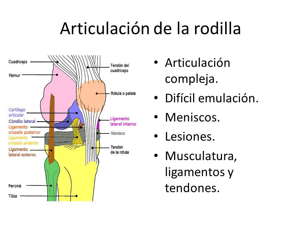 Articulación de la rodilla Articulación compleja.Difícil emulación.