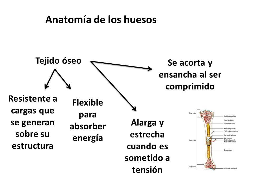 Anatomía de los huesos Tejido óseo Resistente a cargas que se generan sobre su estructura Flexible para absorber energía Alarga y estrecha cuando es sometido a tensión Se acorta y ensancha al ser comprimido