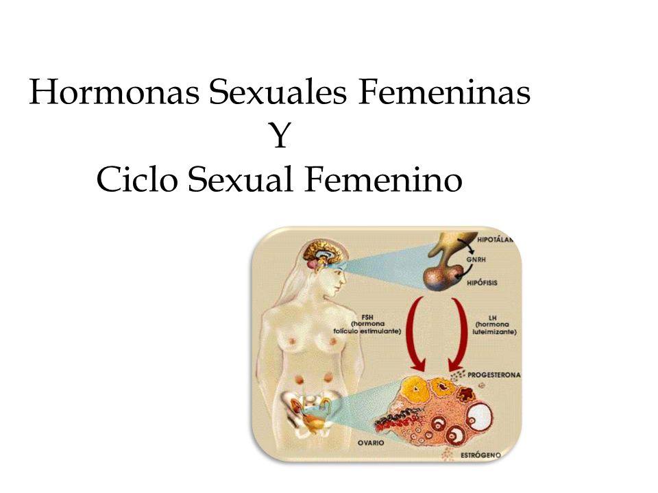Hormonas Sexuales Femeninas Y Ciclo Sexual Femenino