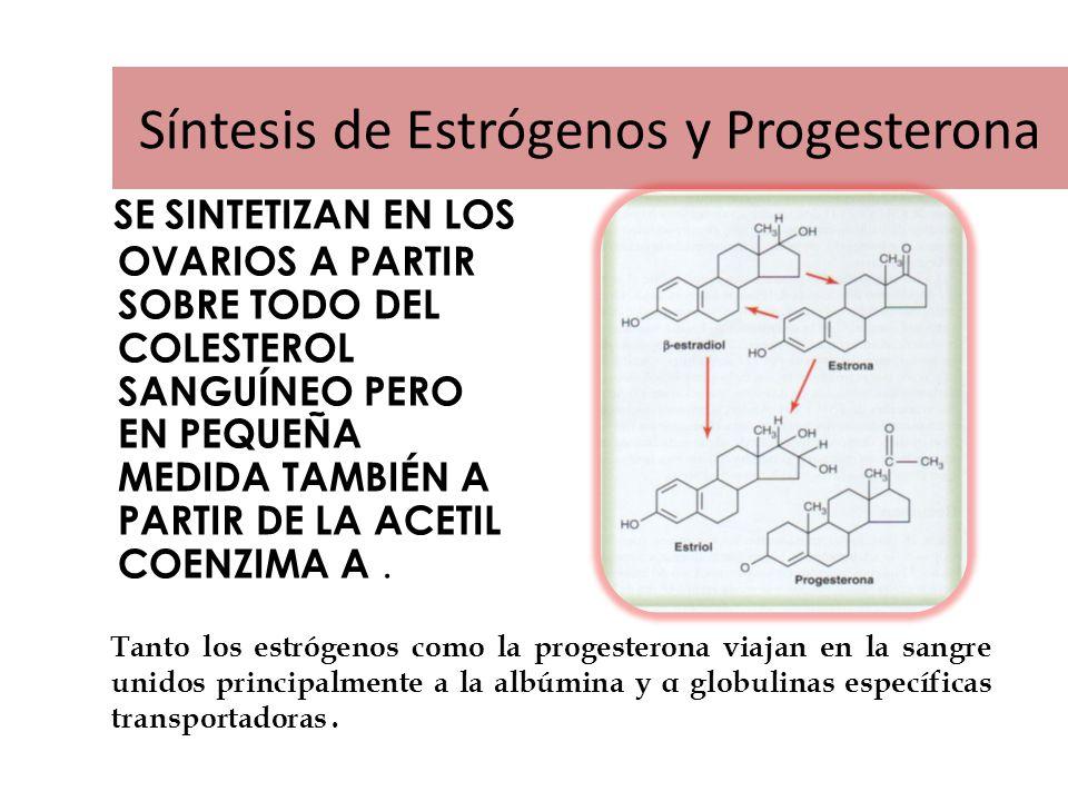 Síntesis de Estrógenos y Progesterona SE SINTETIZAN EN LOS OVARIOS A PARTIR SOBRE TODO DEL COLESTEROL SANGUÍNEO PERO EN PEQUEÑA MEDIDA TAMBIÉN A PARTIR DE LA ACETIL COENZIMA A.