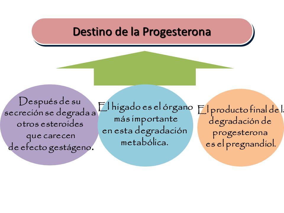 El producto final de la degradación de progesterona es el pregnandiol.