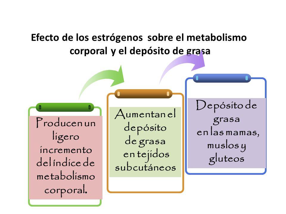 Efecto de los estrógenos sobre el metabolismo corporal y el depósito de grasa Producen un ligero incremento del índice de metabolismo corporal.