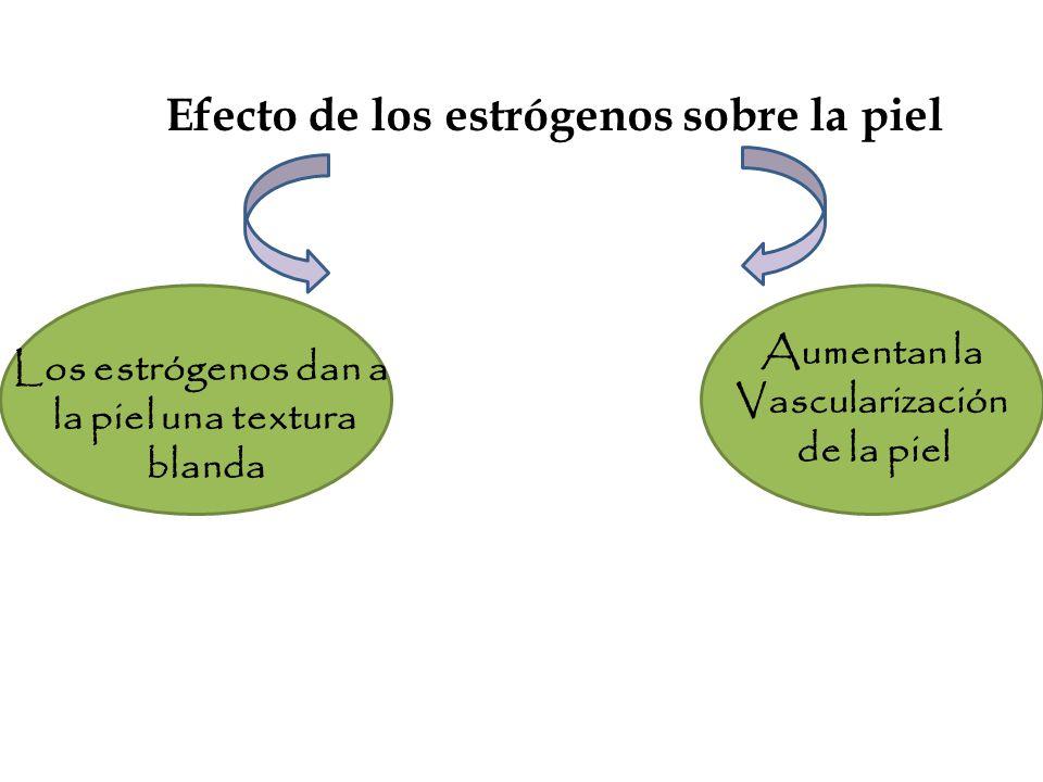 Efecto de los estrógenos sobre la piel Los estrógenos dan a la piel una textura blanda Aumentan la Vascularización de la piel