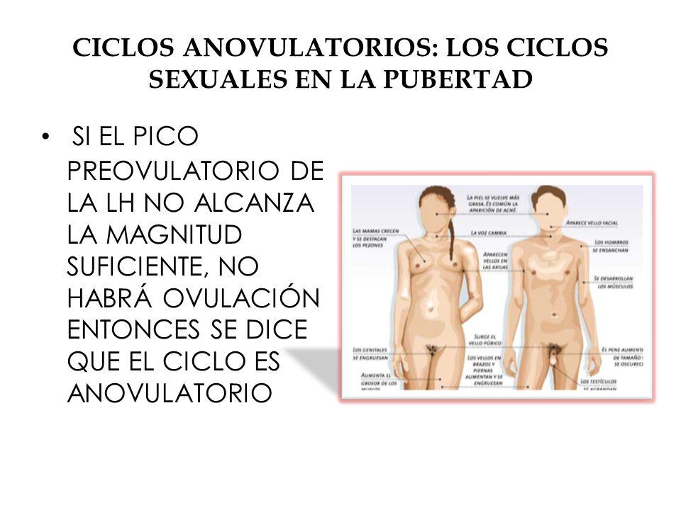 CICLOS ANOVULATORIOS: LOS CICLOS SEXUALES EN LA PUBERTAD SI EL PICO PREOVULATORIO DE LA LH NO ALCANZA LA MAGNITUD SUFICIENTE, NO HABRÁ OVULACIÓN ENTONCES SE DICE QUE EL CICLO ES ANOVULATORIO