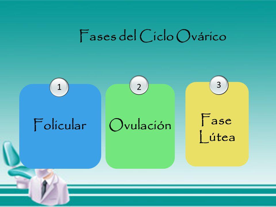 Fases del Ciclo Ovárico Folicular 1 Ovulación 2 Fase Lútea 3