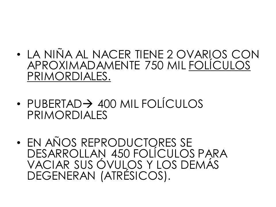LA NIÑA AL NACER TIENE 2 OVARIOS CON APROXIMADAMENTE 750 MIL FOLÍCULOS PRIMORDIALES.
