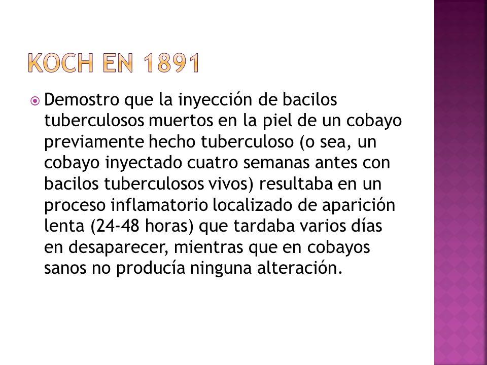 Demostro que la inyección de bacilos tuberculosos muertos en la piel de un cobayo previamente hecho tuberculoso (o sea, un cobayo inyectado cuatro sem