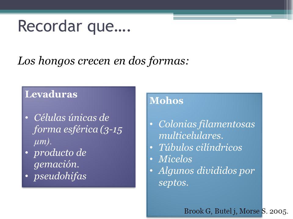 Cultivo de la Muestra (Agar) SaburaudMicosel, micobiótico 2% glucosa.