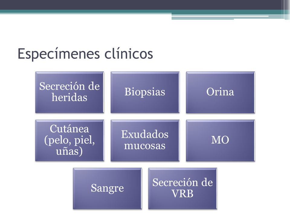 Especímenes clínicos Secreción de heridas BiopsiasOrina Cutánea (pelo, piel, uñas) Exudados mucosas MO Sangre Secreción de VRB