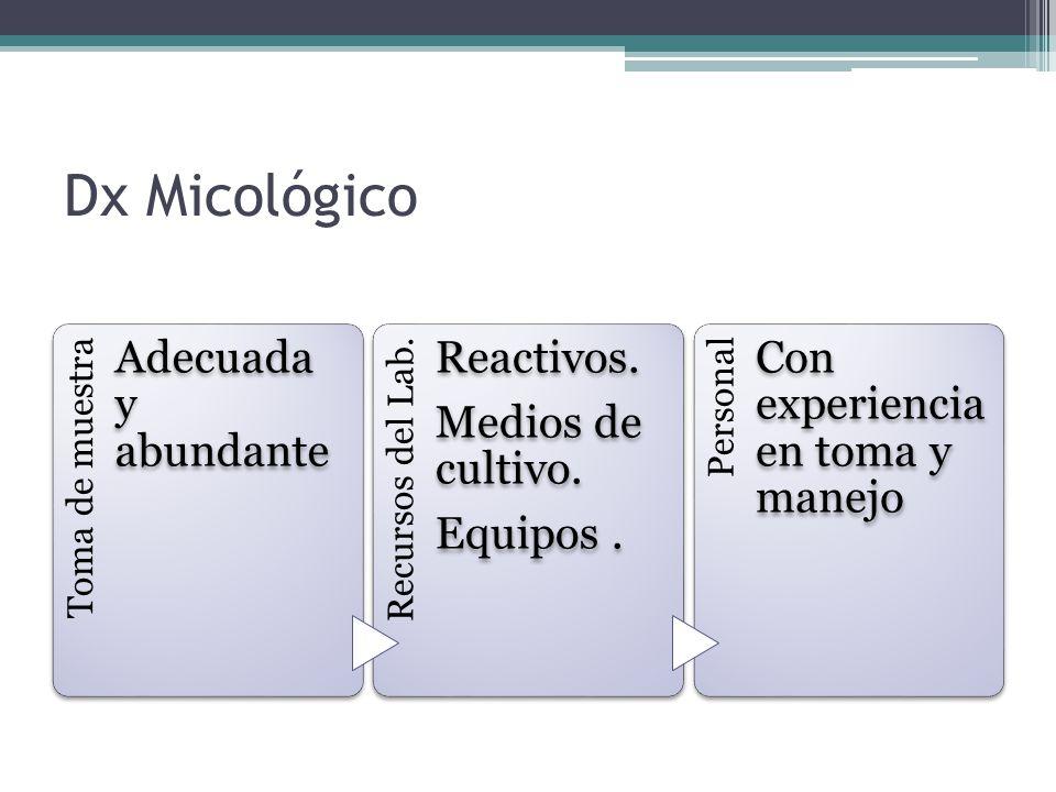 Coccidioides immitis Fase micelial 25-30 °C Fase tisular 37 °C