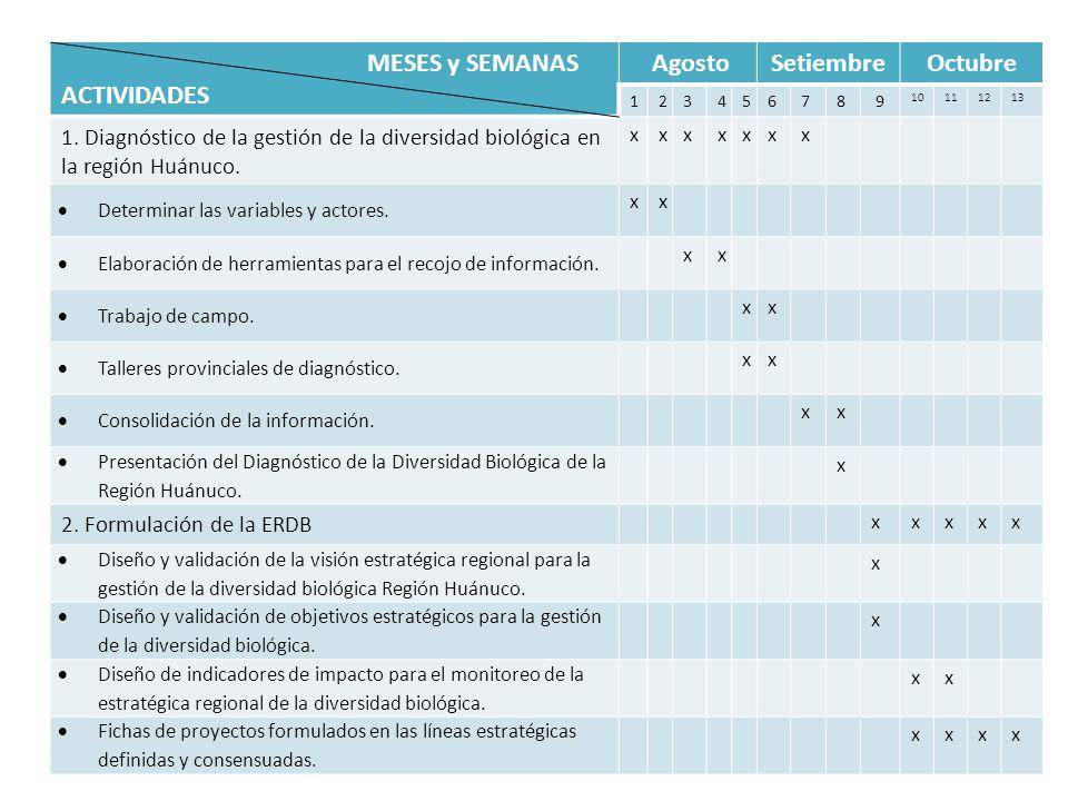 MESES y SEMANAS ACTIVIDADES AgostoSetiembreOctubre 123456789 10111213 1. Diagnóstico de la gestión de la diversidad biológica en la región Huánuco. xx