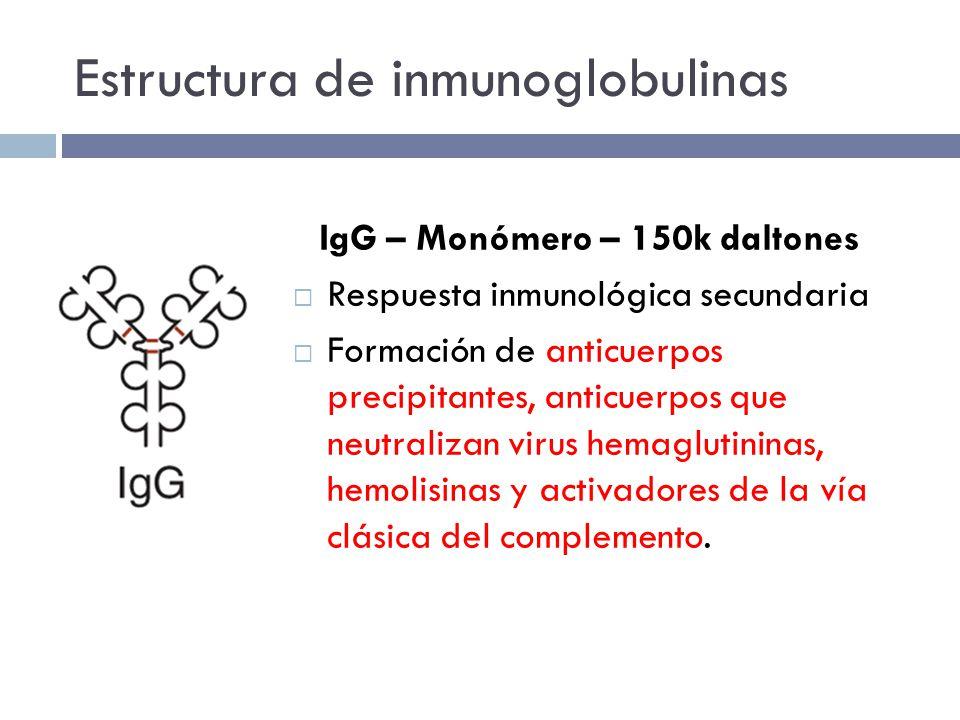 Estructura de inmunoglobulinas IgG – Monómero – 150k daltones Respuesta inmunológica secundaria Formación de anticuerpos precipitantes, anticuerpos que neutralizan virus hemaglutininas, hemolisinas y activadores de la vía clásica del complemento.