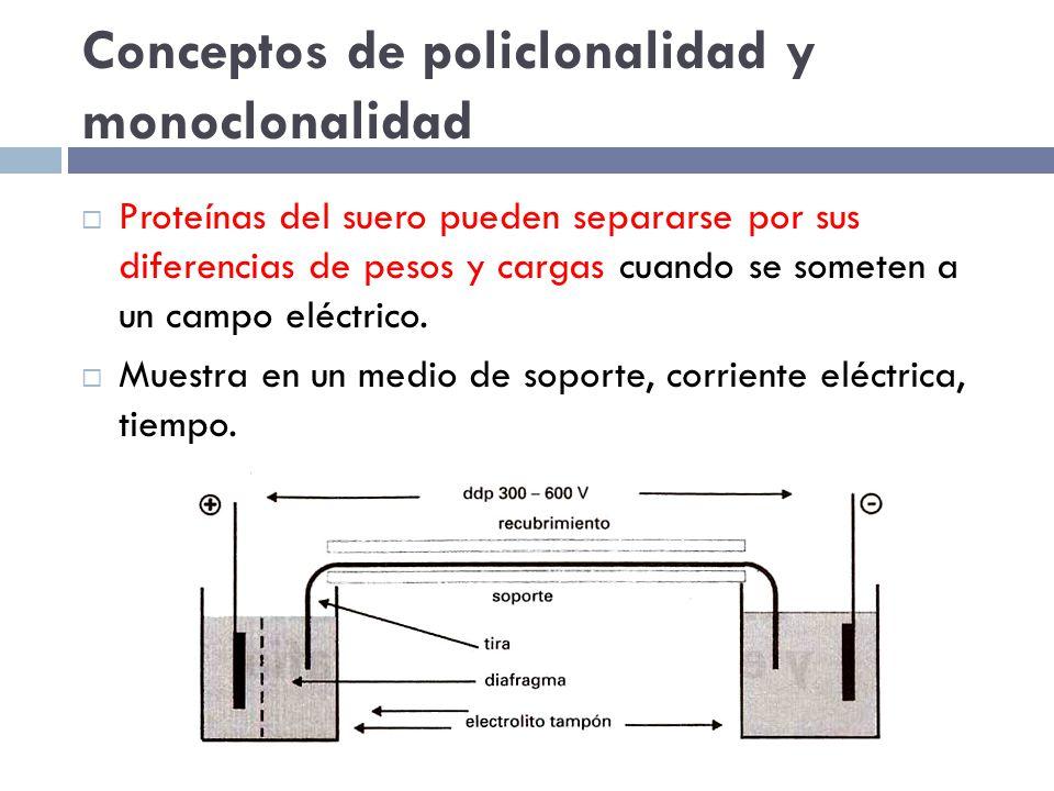 Conceptos de policlonalidad y monoclonalidad Proteínas del suero pueden separarse por sus diferencias de pesos y cargas cuando se someten a un campo eléctrico.