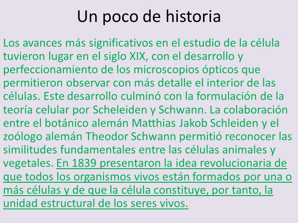 Un poco de historia Los avances más significativos en el estudio de la célula tuvieron lugar en el siglo XIX, con el desarrollo y perfeccionamiento de