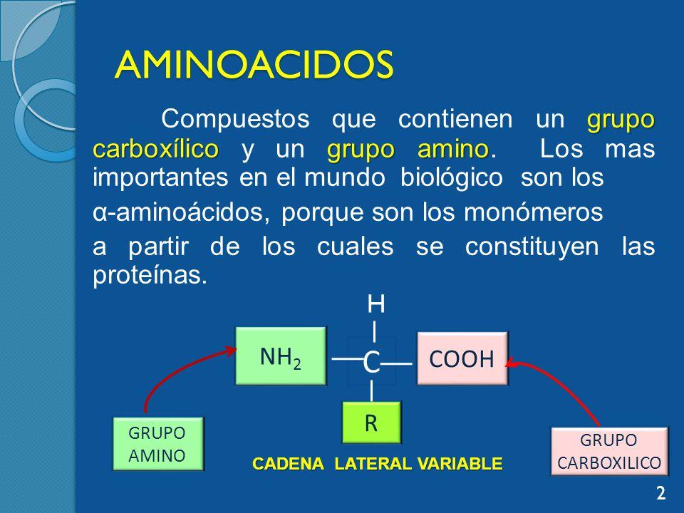 AMINOACIDOS grupo carboxílicogrupo amino Compuestos que contienen un grupo carboxílico y un grupo amino.