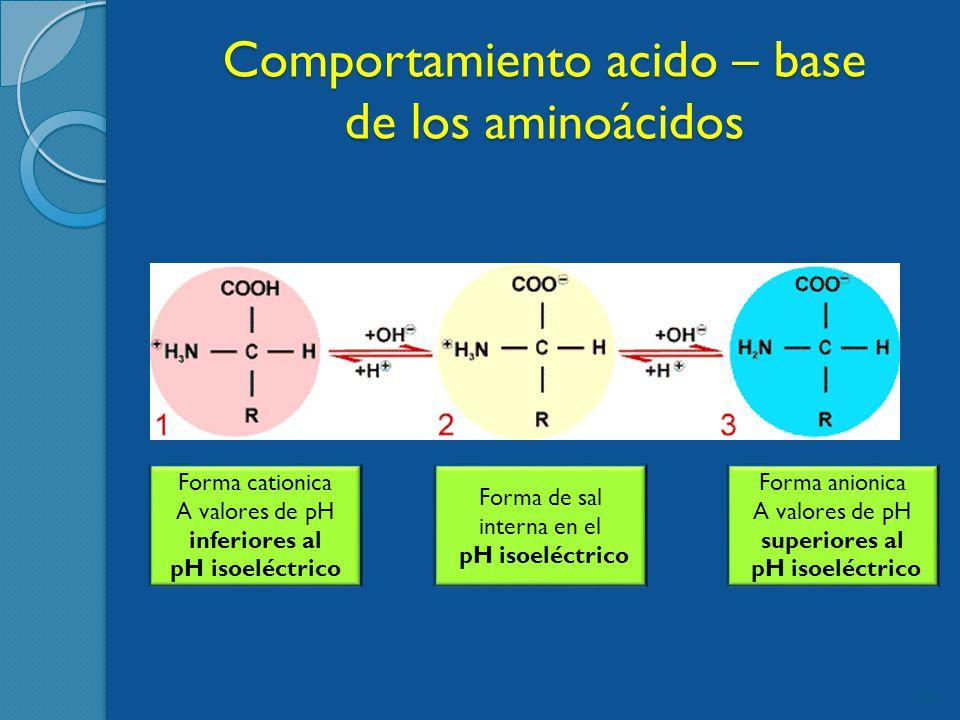 Comportamiento acido – base de los aminoácidos 22 Forma cationica A valores de pH inferiores al pH isoeléctrico Forma de sal interna en el pH isoeléctrico Forma anionica A valores de pH superiores al pH isoeléctrico