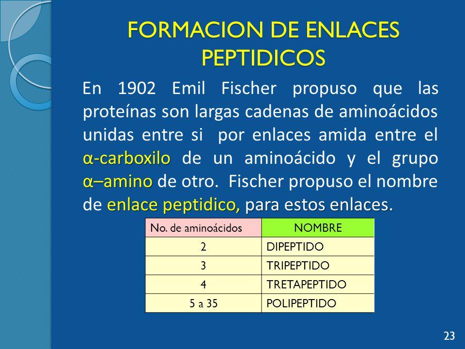 FORMACION DE ENLACES PEPTIDICOS α-carboxilo α–amino enlace peptidico, para estos enlaces.