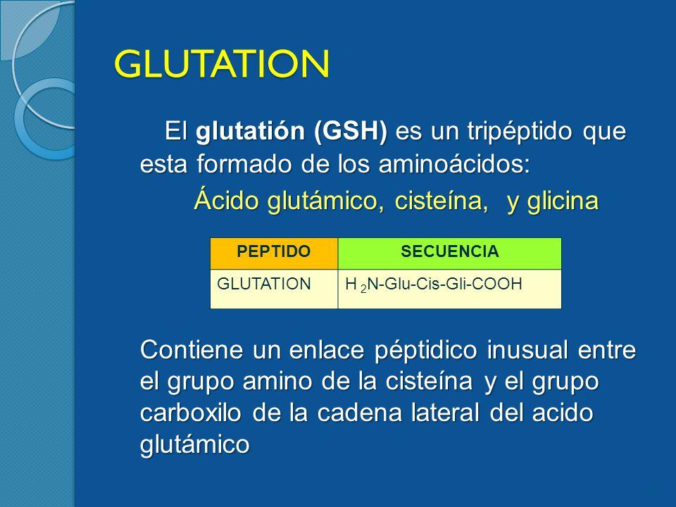 GLUTATION El glutatión (GSH) es un tripéptido que esta formado de los aminoácidos: Ácido glutámico, cisteína, y glicina Contiene un enlace péptidico inusual entre el grupo amino de la cisteína y el grupo carboxilo de la cadena lateral del acido glutámico 29 PEPTIDOSECUENCIA GLUTATIONH 2 N-Glu-Cis-Gli-COOH