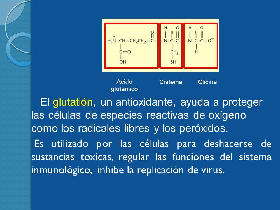 glutatión El glutatión, un antioxidante, ayuda a proteger las células de especies reactivas de oxígeno como los radicales libres y los peróxidos.