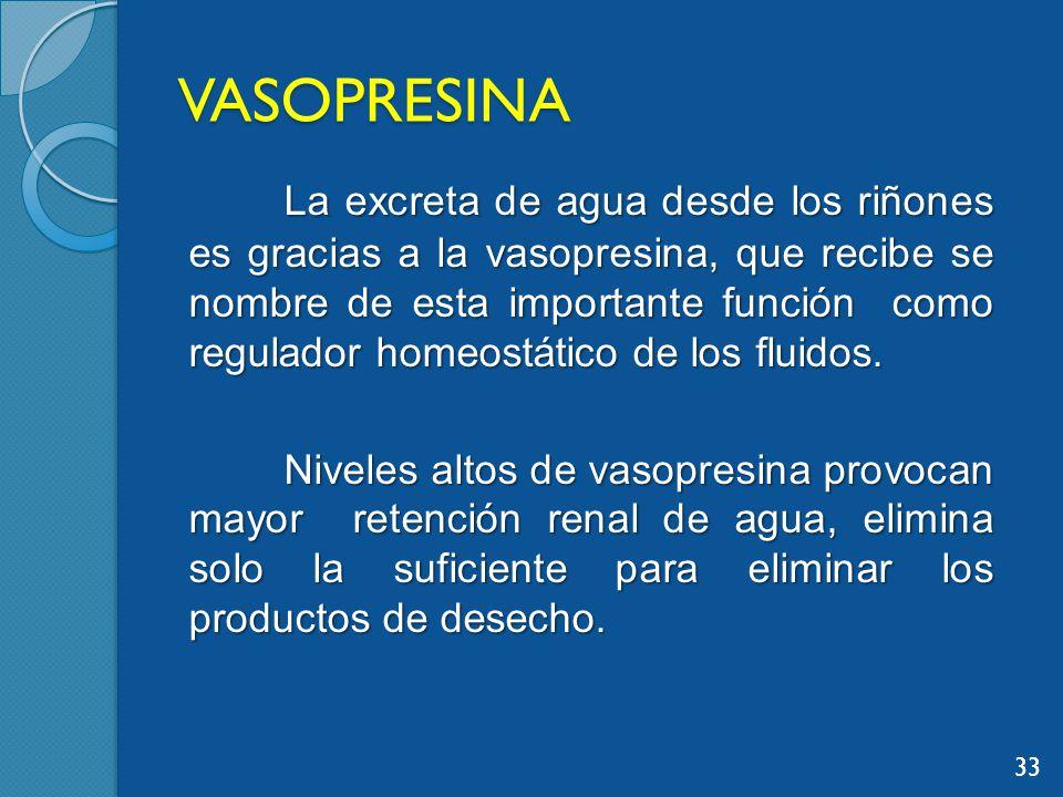 VASOPRESINA La excreta de agua desde los riñones es gracias a la vasopresina, que recibe se nombre de esta importante función como regulador homeostático de los fluidos.