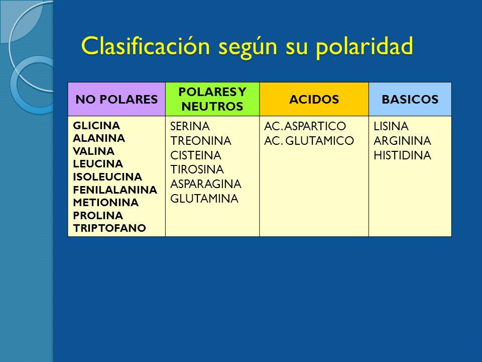 Clasificación según su polaridad NO POLARES POLARES Y NEUTROS ACIDOSBASICOS GLICINA ALANINA VALINA LEUCINA ISOLEUCINA FENILALANINA METIONINA PROLINA TRIPTOFANO SERINA TREONINA CISTEINA TIROSINA ASPARAGINA GLUTAMINA AC.