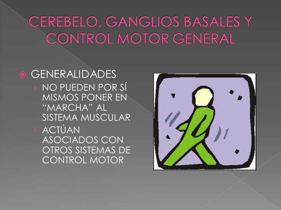 GENERALIDADES NO PUEDEN POR SÍ MISMOS PONER EN MARCHA AL SISTEMA MUSCULAR ACTÚAN ASOCIADOS CON OTROS SISTEMAS DE CONTROL MOTOR