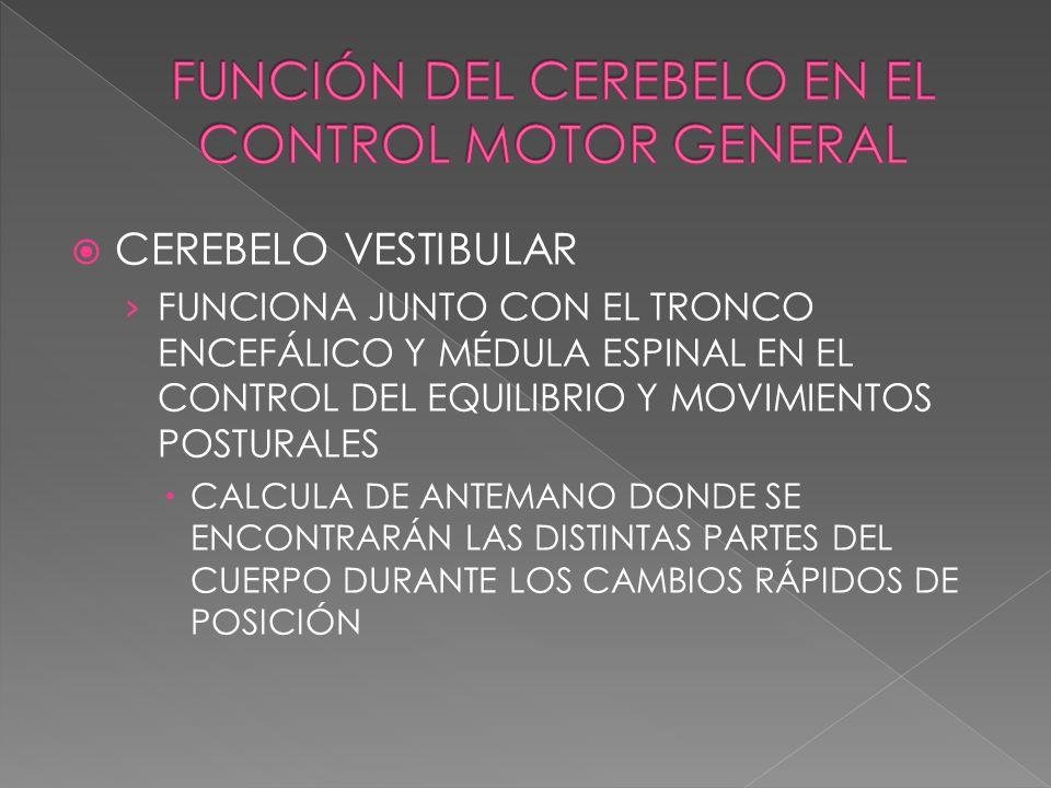 CEREBELO VESTIBULAR FUNCIONA JUNTO CON EL TRONCO ENCEFÁLICO Y MÉDULA ESPINAL EN EL CONTROL DEL EQUILIBRIO Y MOVIMIENTOS POSTURALES CALCULA DE ANTEMANO