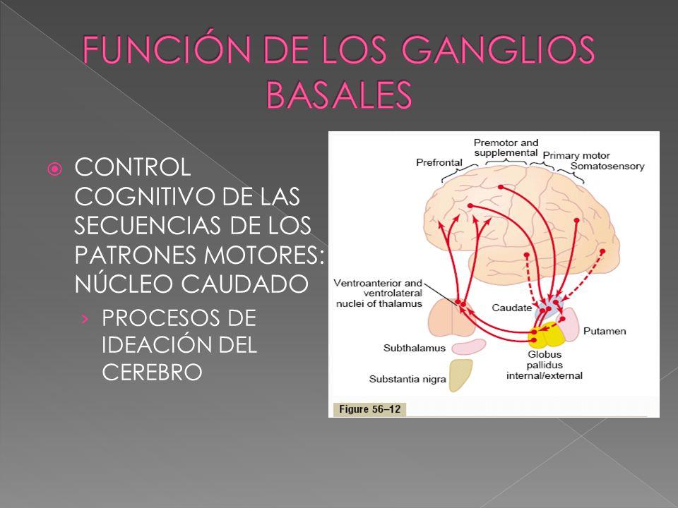 CONTROL COGNITIVO DE LAS SECUENCIAS DE LOS PATRONES MOTORES: NÚCLEO CAUDADO PROCESOS DE IDEACIÓN DEL CEREBRO