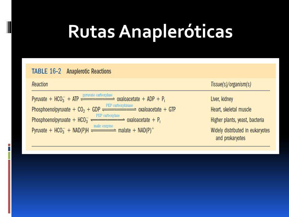 Conclusiones Las rutas anapleróticas y el ciclo de glioxilato son esenciales para la recuperación de intermediarios que son removidos durante la biosíntesis.