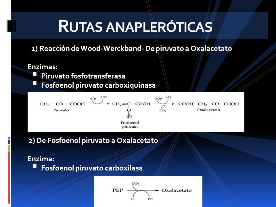 R UTAS ANAPLERÓTICAS 3.De piruvato a oxalacetato Enzima Piruvato carboxilasa 4.