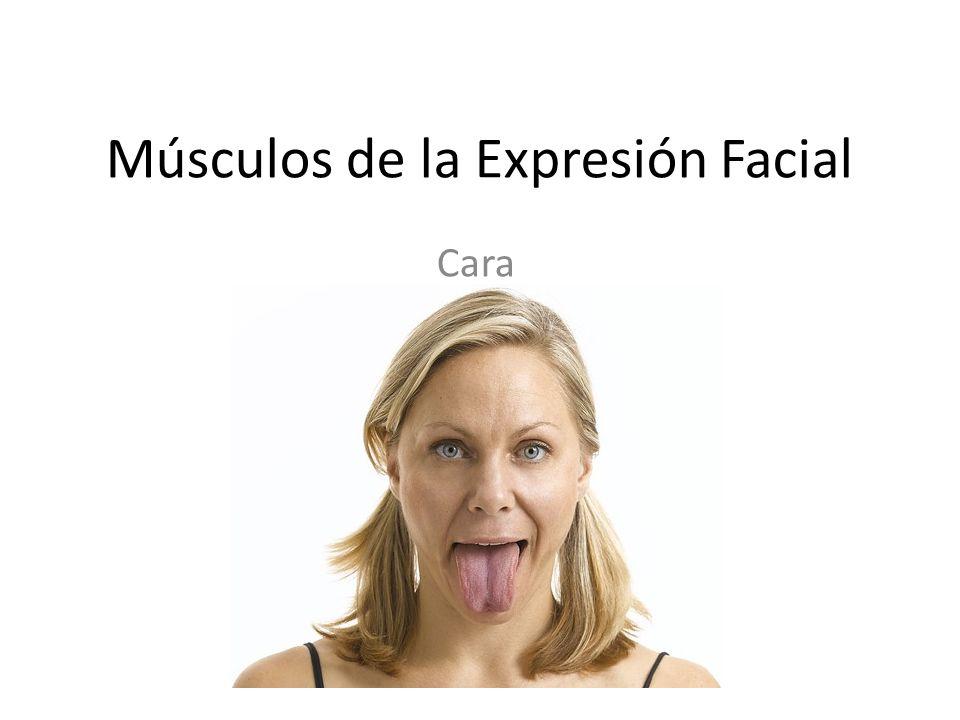 Músculos de la Expresión Facial Cara