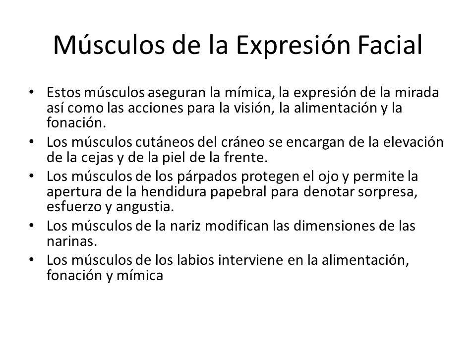 Músculos de la Expresión Facial Estos músculos aseguran la mímica, la expresión de la mirada así como las acciones para la visión, la alimentación y l