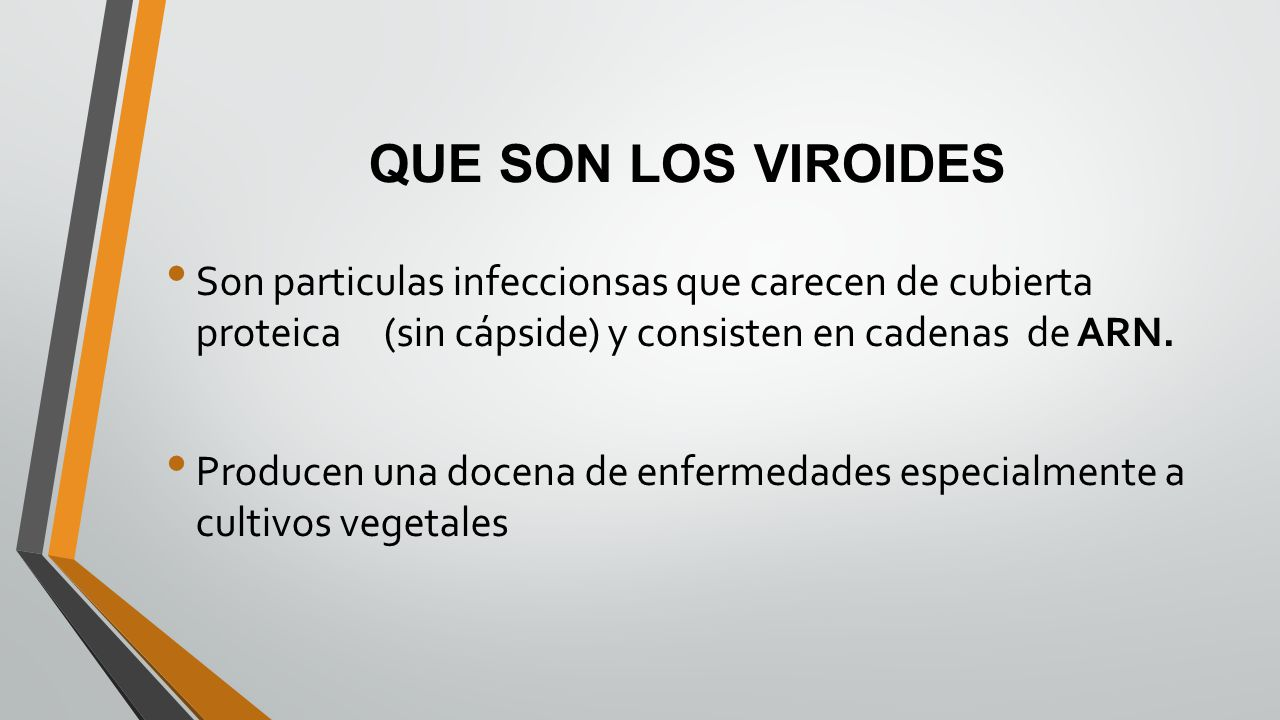 QUE SON LOS VIROIDES Son particulas infeccionsas que carecen de cubierta proteica (sin cápside) y consisten en cadenas de ARN. Producen una docena de