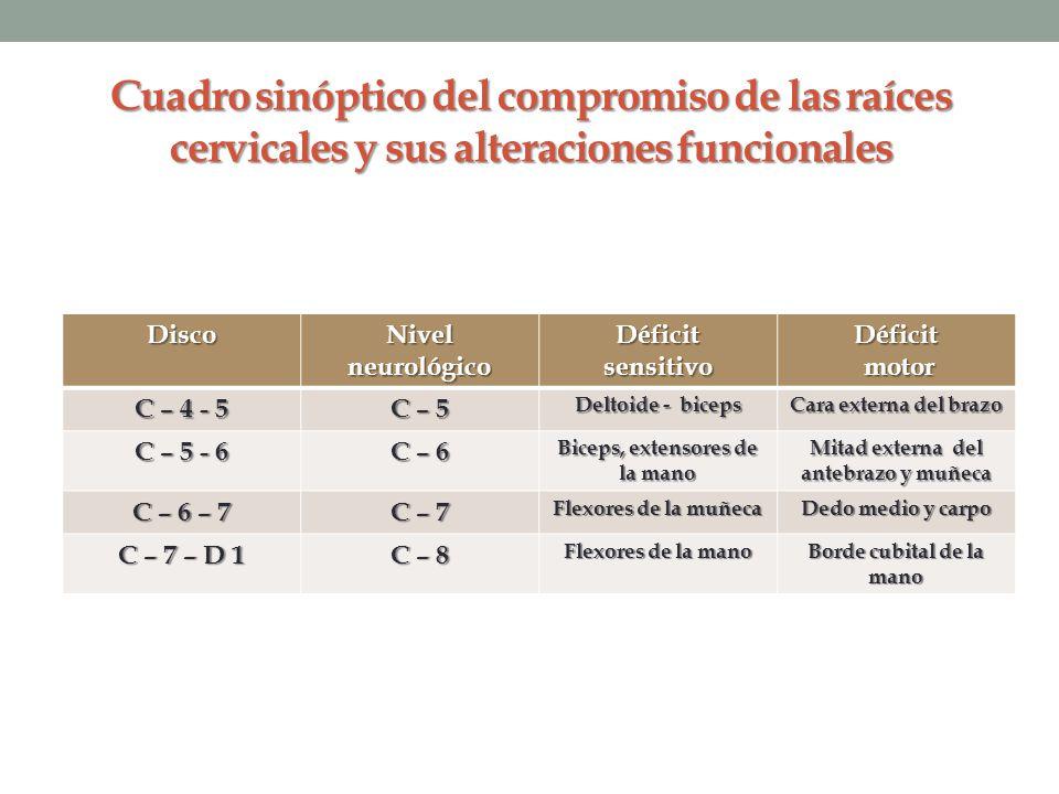 Cuadro sinóptico del compromiso de las raíces cervicales y sus alteraciones funcionales Disco Nivel neurológico DéficitsensitivoDéficit motor motor C