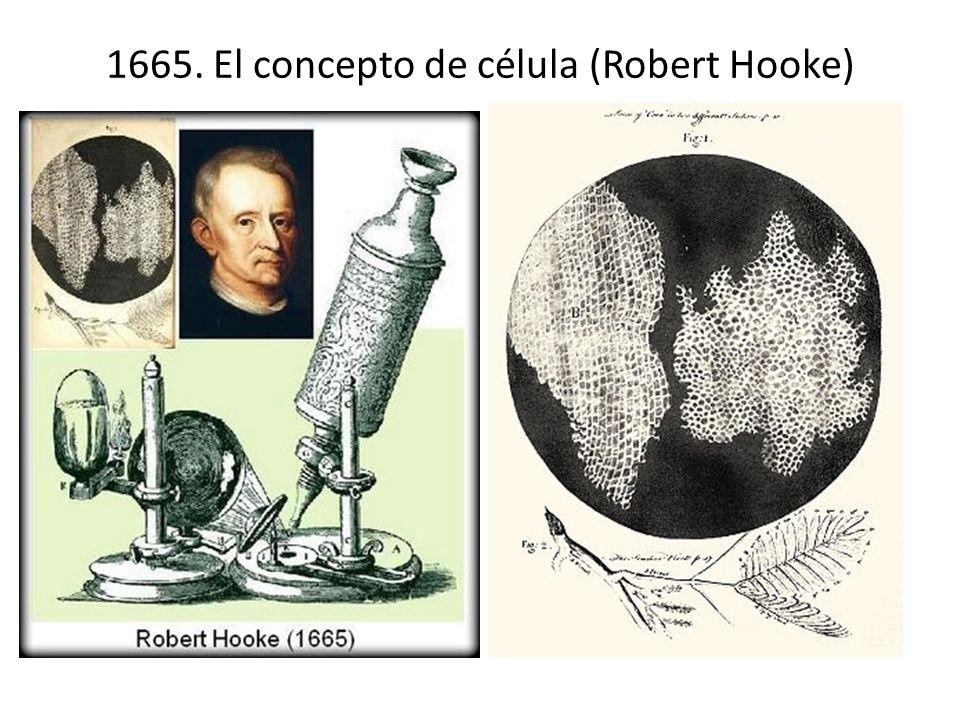 1665. El concepto de célula (Robert Hooke)