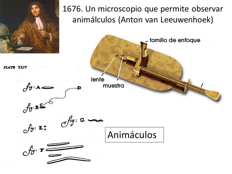 1676. Un microscopio que permite observar animálculos (Anton van Leeuwenhoek) Animáculos