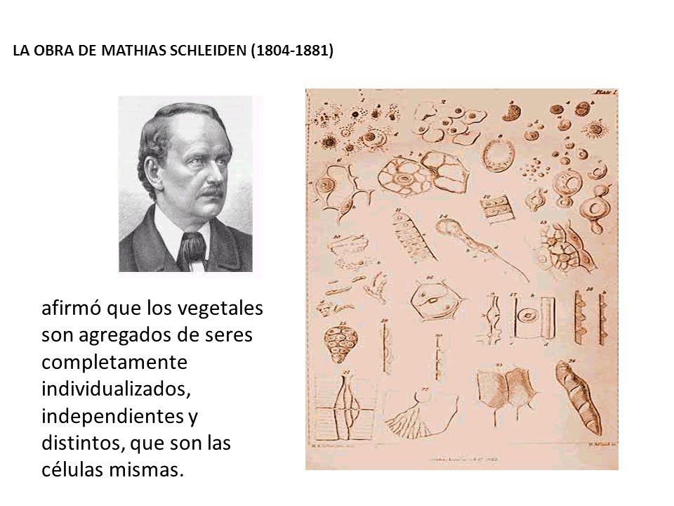 LA OBRA DE MATHIAS SCHLEIDEN (1804-1881) afirmó que los vegetales son agregados de seres completamente individualizados, independientes y distintos, q