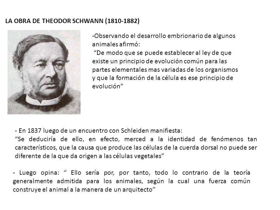 LA OBRA DE THEODOR SCHWANN (1810-1882) -Observando el desarrollo embrionario de algunos animales afirmó: De modo que se puede establecer al ley de que