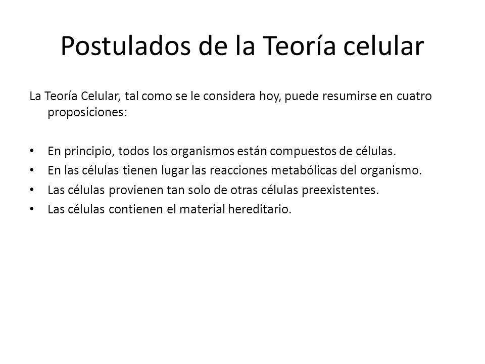 Postulados de la Teoría celular La Teoría Celular, tal como se le considera hoy, puede resumirse en cuatro proposiciones: En principio, todos los orga