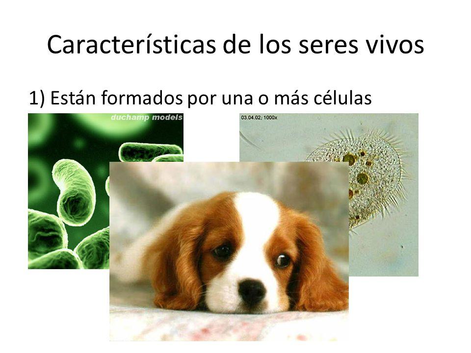 Características de los seres vivos 1) Están formados por una o más células