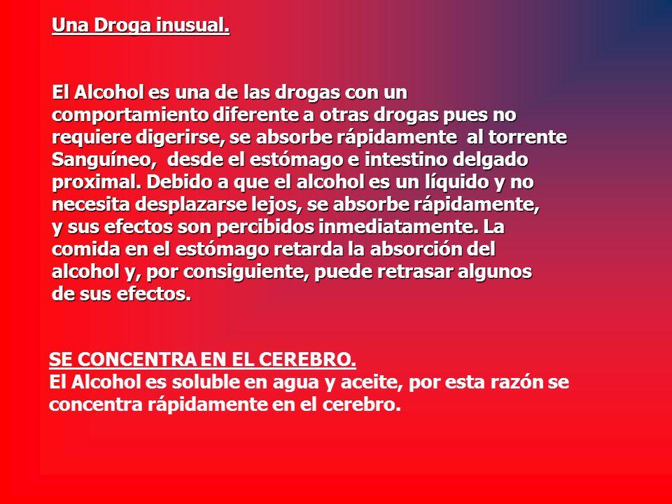 Una Droga inusual. El Alcohol es una de las drogas con un comportamiento diferente a otras drogas pues no requiere digerirse, se absorbe rápidamente a