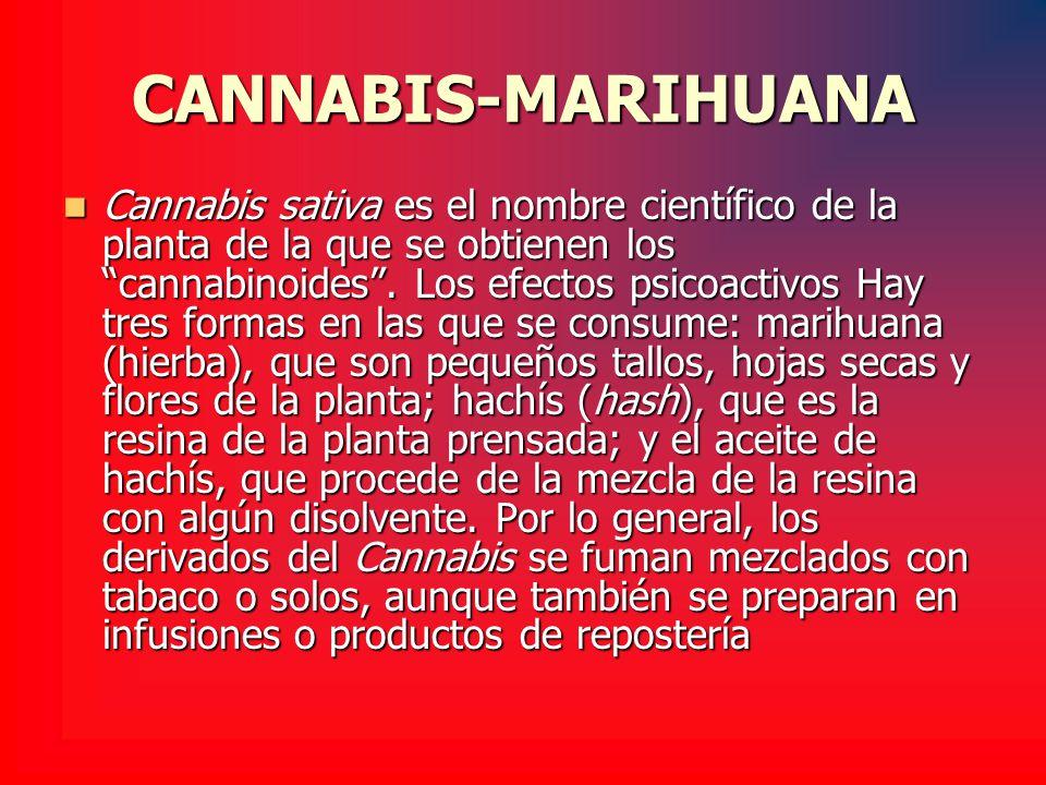 CANNABIS-MARIHUANA Cannabis sativa es el nombre científico de la planta de la que se obtienen los cannabinoides. Los efectos psicoactivos Hay tres for