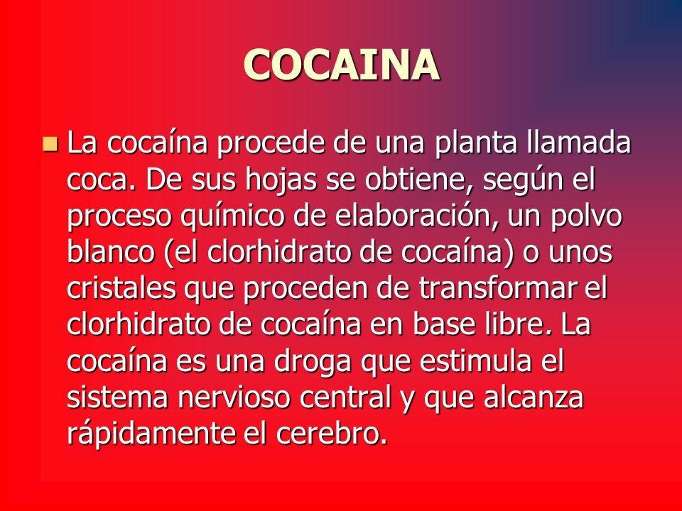 COCAINA La cocaína procede de una planta llamada coca. De sus hojas se obtiene, según el proceso químico de elaboración, un polvo blanco (el clorhidra