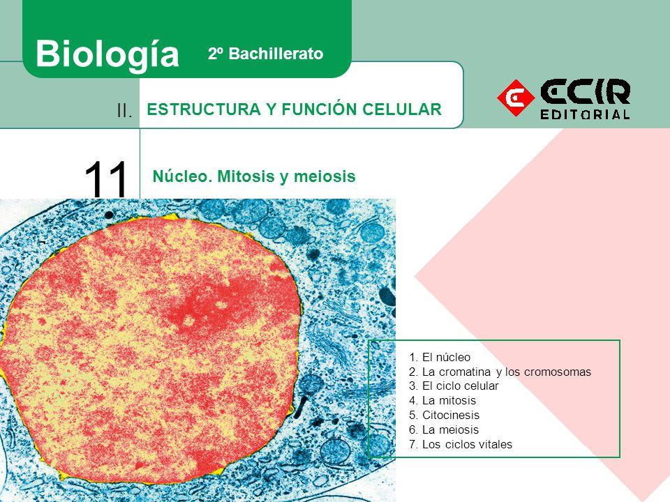 ESTRUCTURA Y FUNCIÓN CELULAR II.11 Núcleo. Mitosis y meiosis Biología 2º Bachillerato 1.