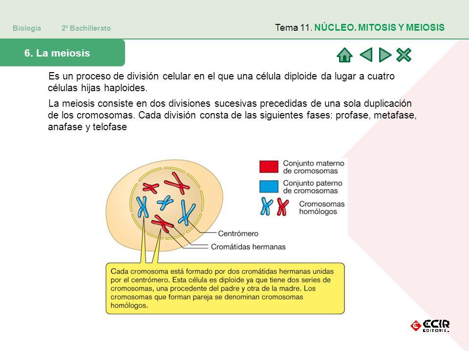 Biología 2º Bachillerato 6.
