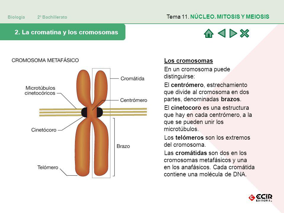Biología 2º Bachillerato 2.