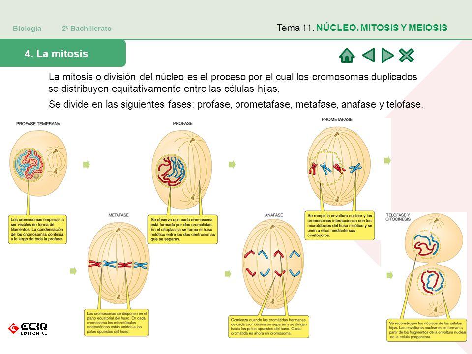 Biología 2º Bachillerato 4.