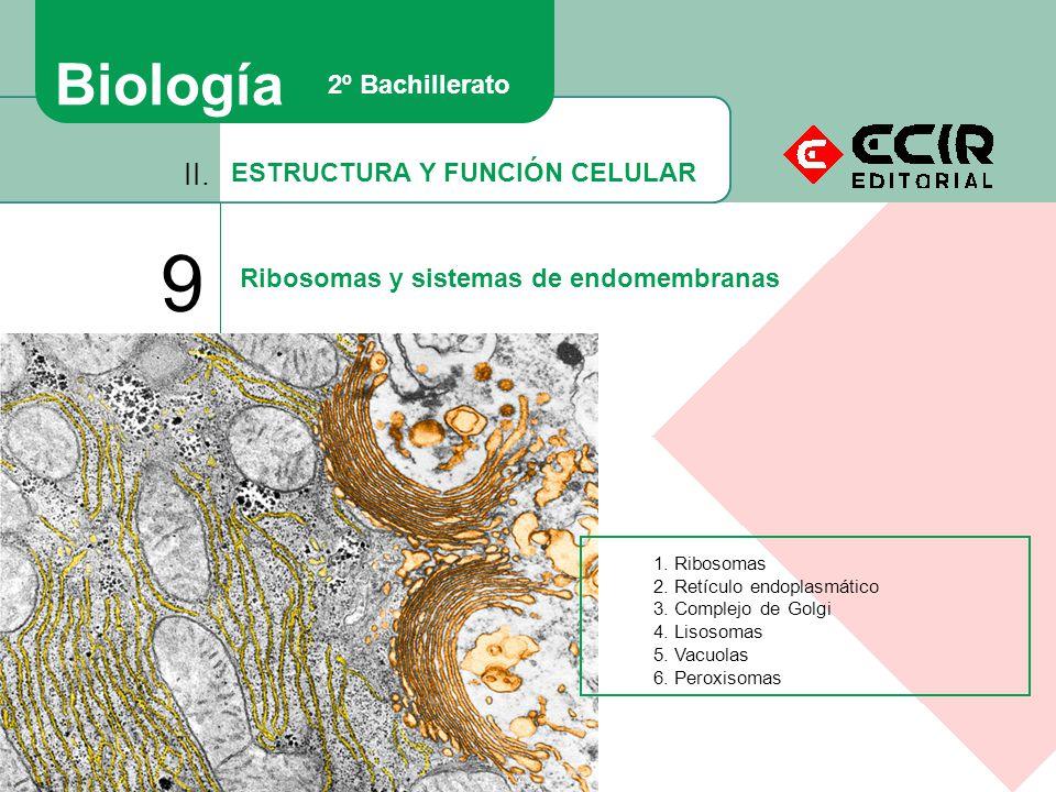 ESTRUCTURA Y FUNCIÓN CELULAR II. 9 Ribosomas y sistemas de endomembranas Biología 2º Bachillerato 1. Ribosomas 2. Retículo endoplasmático 3. Complejo
